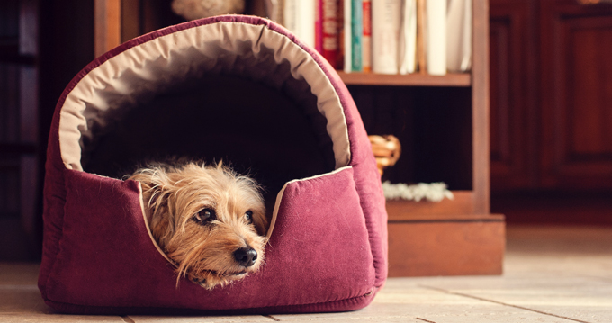 Best Eco-friendly Dog Beds - Dogtime