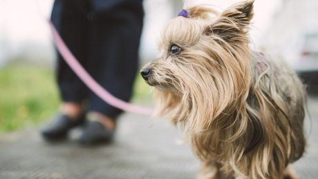 The Most Long-lived Dog Breeds