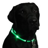 Night Safety Lights for Dogs