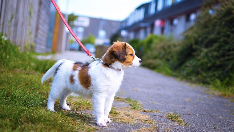 Dog Standing Outdoors