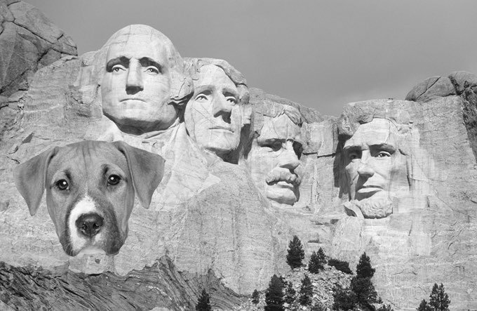 What Makes A Dog Presidential Dogtime