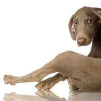 All About Kennel Cough