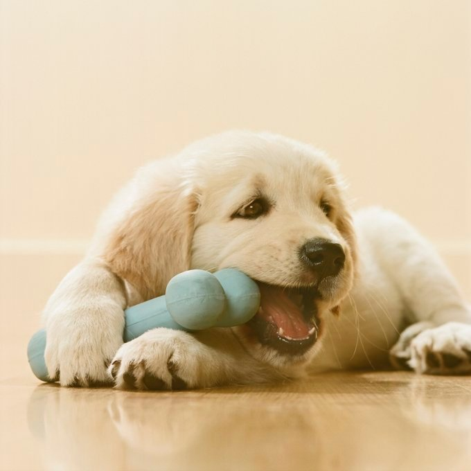 Golden Retriever Puppy chewing bone, close-up
