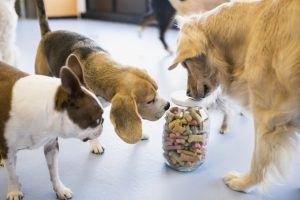 How To: Choosing The Right Dog Treats