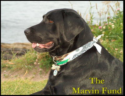 file_25551_marvin_fund