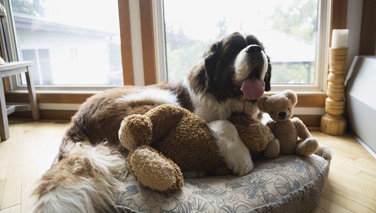 Dog Beds: Everything You Need To Know - Dogtime