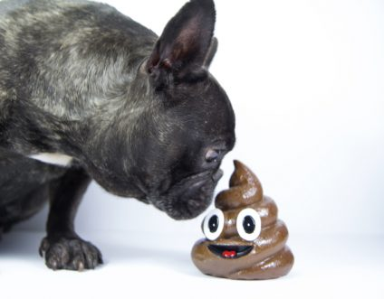 Dog Diarrhea: Should I Be Worried?