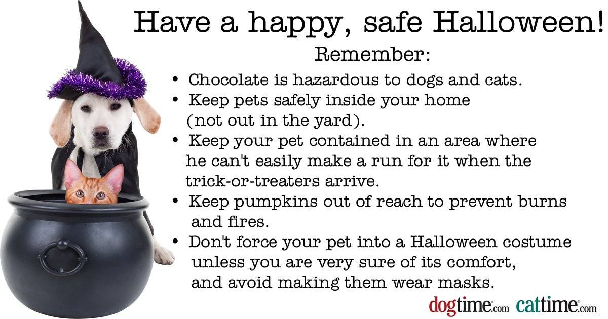 Keeping Your Pets Safe On Halloween Dogtime