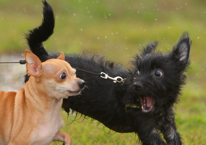 How To Stop Puppy Barking At Other Dogs