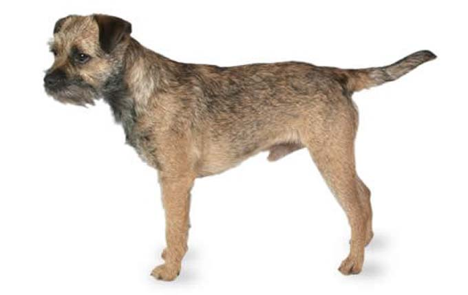 What Dog Breeds Are Good For Running Cairn Terrier