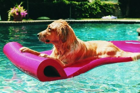 Chlorine Bad For Dogs?