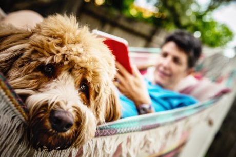 Diagnosing And Treating Urinary Incontinence In Dogs