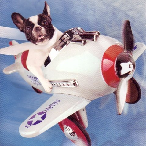Flying with dogs dogtime for Small dogs on airplanes