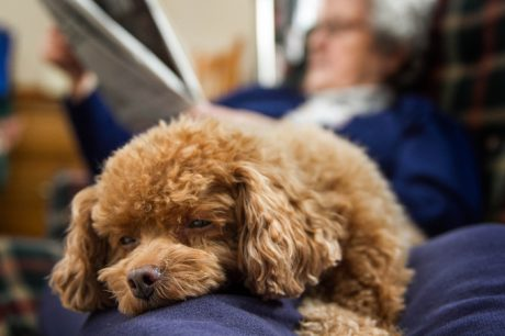 Dear Labby: Smelly Dog–Or Insensitive Family?