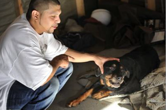 Failed euthanasia leads to second chance for Detroit Rottie