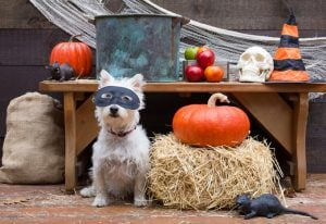 Pet Safety During Halloween