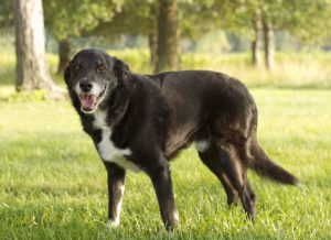 Signs Of Dog Arthritis?