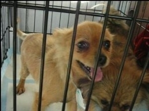 What happened to the dogs when Schindler Farms puppy mill was closed down?