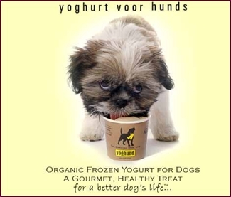 yoghund frozen yogurt treats