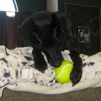 Jade & Orbee Tennis Ball