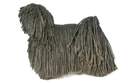 Puli Dog Breed Information Pictures Characteristics