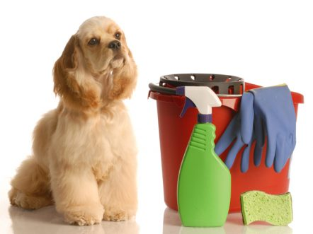 Cleaning Your Pet Friendly Home