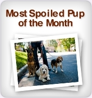 Most Spoiled Pup of the Month