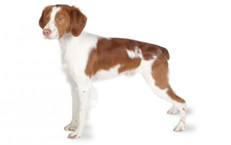 Brittany Dog Names