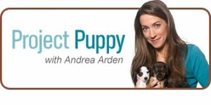 Project Puppy: first installment