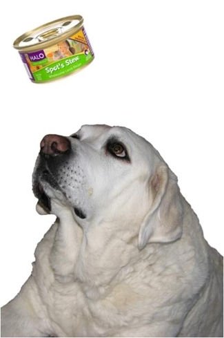 Joey levitating Spot's Stew for dogs