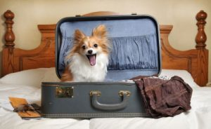 Ten Signs a Bed & Breakfast has TLC (True Love for Canines)