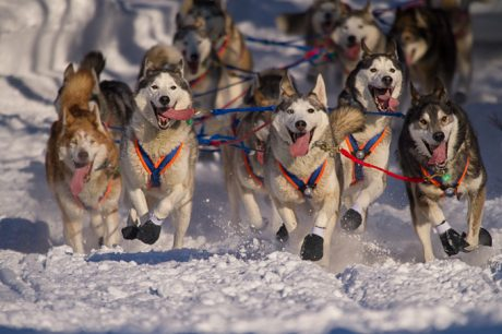 The Iditarod Dog Race And The Bigger Conversation It Leads To
