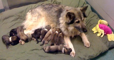 Mother's Day For Dog Lovers: 5 Great Ways To Honor Your Mom