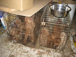 President Obama to respond to anti-puppy mill petition
