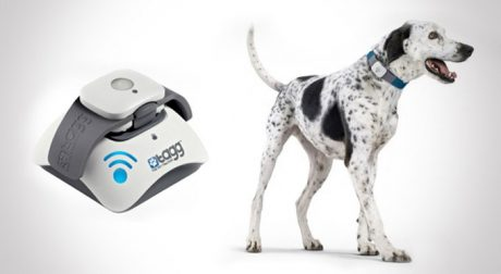 Holiday Gift Guide: Dog Gadgets And Contraptions