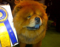 Martha Stewart's Genghis Khan out-Chows the competition at Westminster