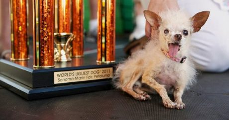 Ugliest dog in the world dies