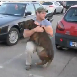 Boxer dog welcomes soldier home