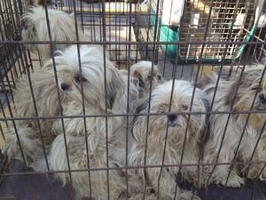 350 dogs rescued from Michigan puppy mill