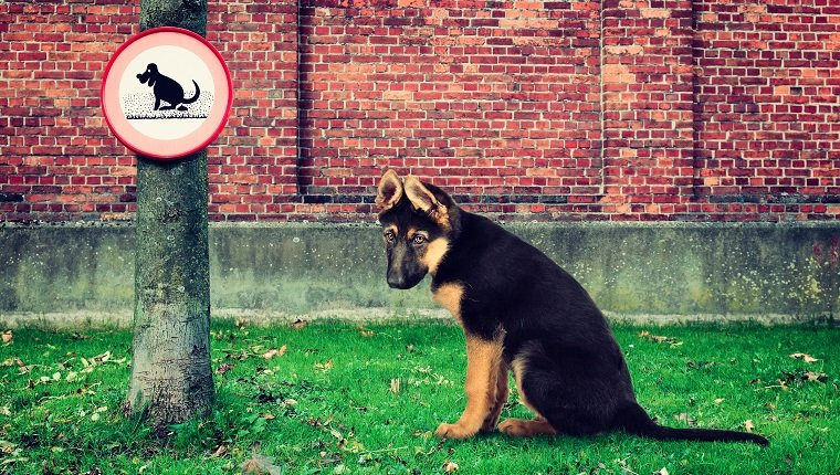 A sad dog is sitting outdoors in the grass next to a tree with a no pooping sign.
