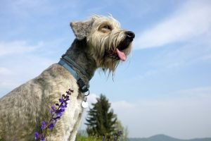 Herbal Medicine For Dogs: 101