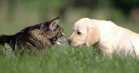 Tips for introducing dog to cat