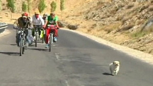 Little dog follows cyclists on grueling trek from China to Tibet