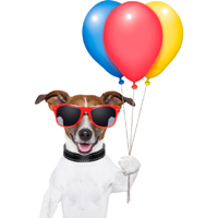 DogTime video of the week: Dog vs. balloons