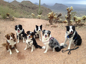 Agility trainer and six dogs crash in the desert
