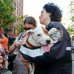 Authorities seize 47 Pit Bulls from Bronx basement