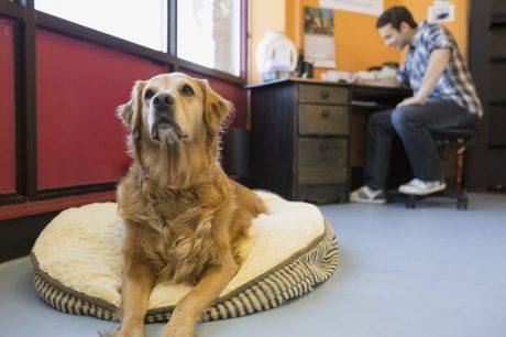 Take Your Pup To Work This Take Your Dog To Work Day