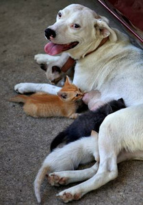 """Orphaned kittens find a new """"mama"""""""
