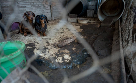 Hsus Report Is The Akc Helping Protect Puppy Mills Dogtime