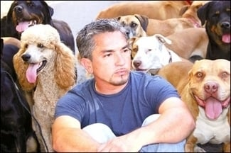 The good, the bad, and Cesar Millan
